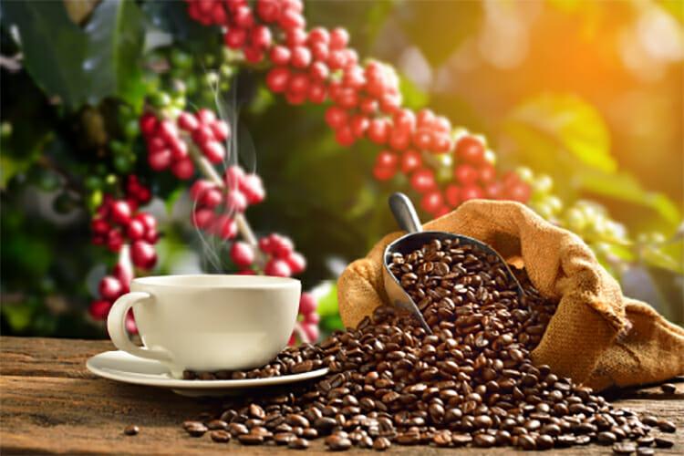 Una experiencia única para saborear el origen y tipos de café italiano.
